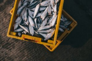 Seguridad del pescado por la FDA