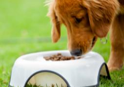 Controles preventivos industria alimentación animales